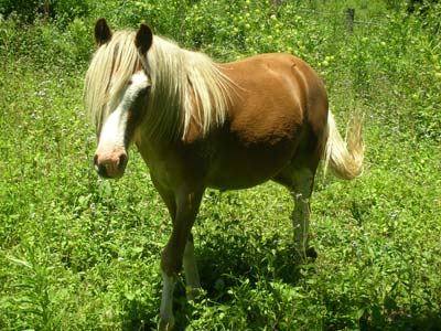 I Buried a Pony